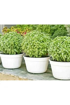 OXE GARDEN Top Fesleğen 15+ Adet Çiçek Tohumu Al Saksı+torf Hediye Doğal Sinek Kovucu Ev Bahçe Için Ideal