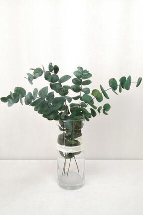 Kuru Çiçek Deposu Şoklanmis Büyük Mavi Okaliptus Demeti