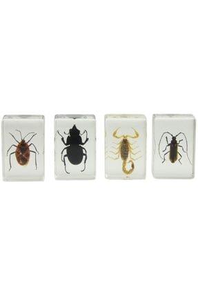 Celestron ?? Böcek Örneği Seti 44407 3d