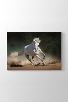 TabloShop Beyaz At Resmi (Model 1) - (ÖLÇÜSÜ 45x30 cm)
