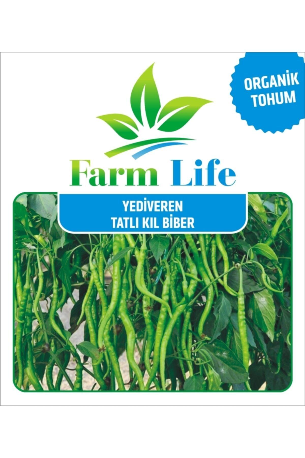 FarmLife Tohum 1000 Adet Yediveren Tatlı Kıl Biber Tohumu 2