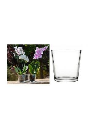 Paşabahçe 53827 Botanica Orkide Vazo
