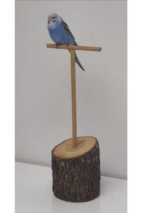 BAYATA Kuş Tüneği