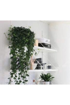 Home 2 Metre Uzunluğunda Plastik Yapay Sarmaşık Çiçek