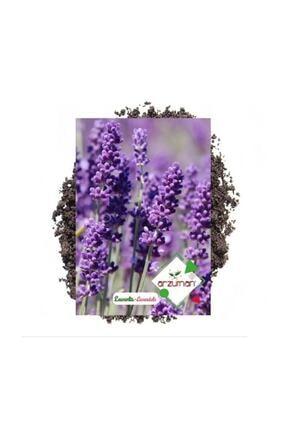 Arzuman Tohum Lavanta Çiçeği Tohumu 100 Adet