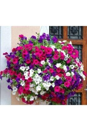 Tohum Dünyam 25 Adet Petunya Balkon Çiçeği Tohumu