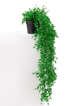 Çiçekmisin Mini Siyah Plastik Saksıda Sarkan Şimşir