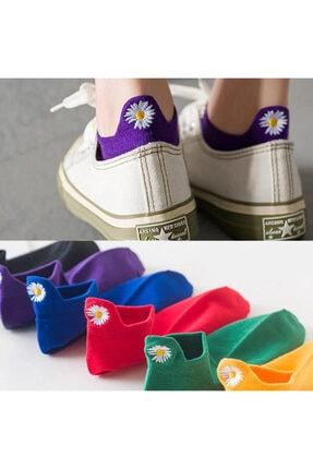 Cinnamon Bunny Kadın Papatya Nakışlı Kısa Renkli Çorap 6 Çift