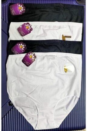 Papatya Kadın Renkli Modal Hamile Külot Paket 4 Adet