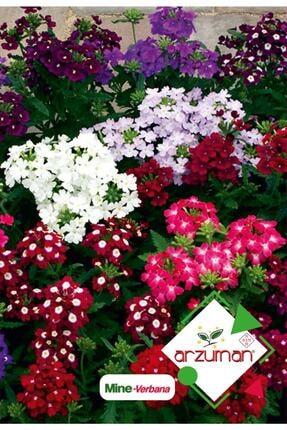 Arzuman Mine (verbena) Çiçek Tohumu 50 Adet