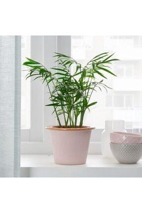 IKEA Fnıttrıg Bitki Çiçek Bahçe Saksısı - 9 Cm Saksı Dekoratif