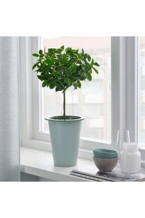 IKEA Fnıttrıg Bitki Çiçek Bahçe Saksısı - 12 Cm Saksı Dekoratif
