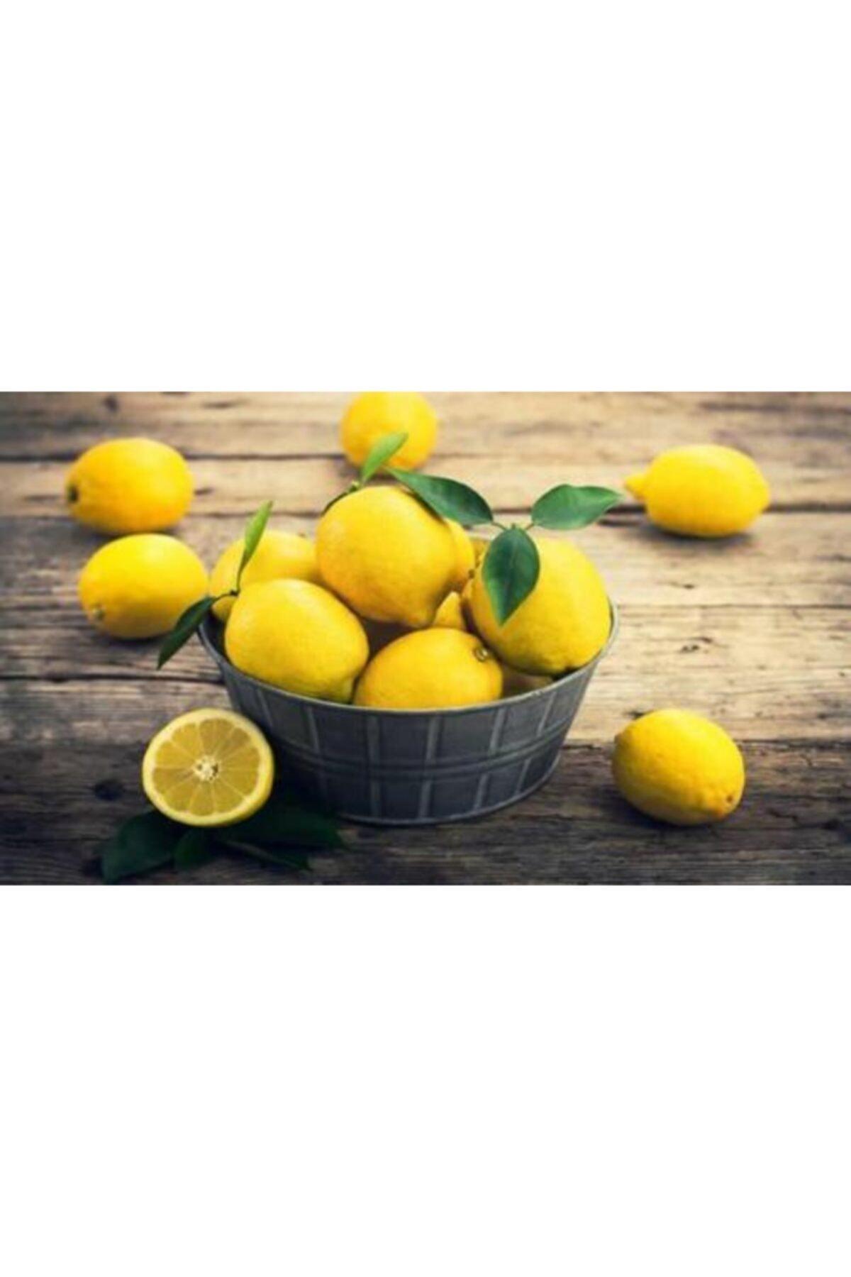 Venilia Cep Ve Çanta Boy Limon Kolonyası 30 Ml 2
