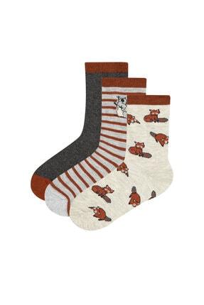 Penti Erkek Çocuk Kahverengi Racoon 3lü Soket Çorap