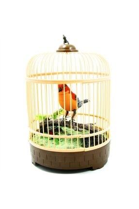 Vardem Pilli Kuş Sesli Kuş Cenneti Kafesli Öten Kuş