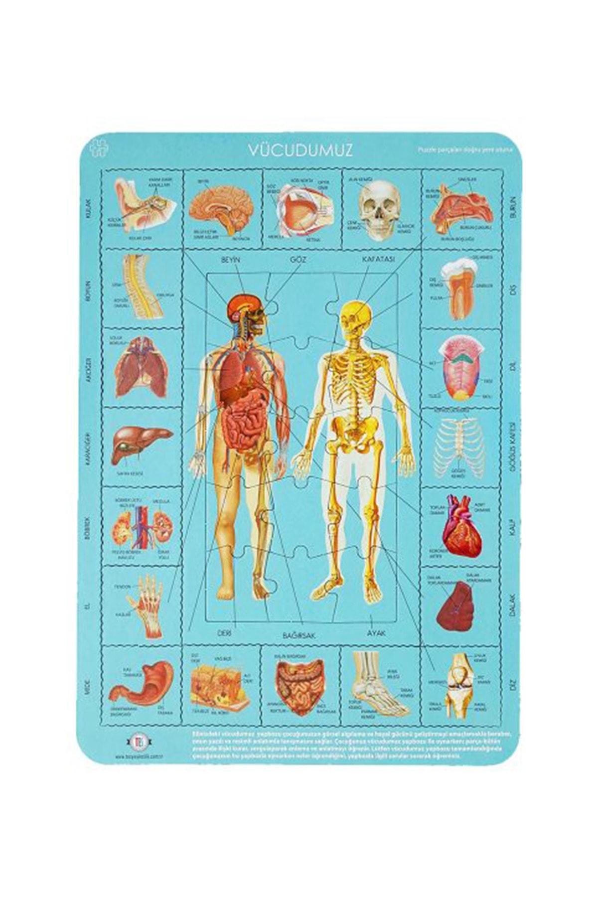 Tes Yayıncılık Vücudumuzu Tanıyalım Puzzle 35 Parça 28x40 Cm 1