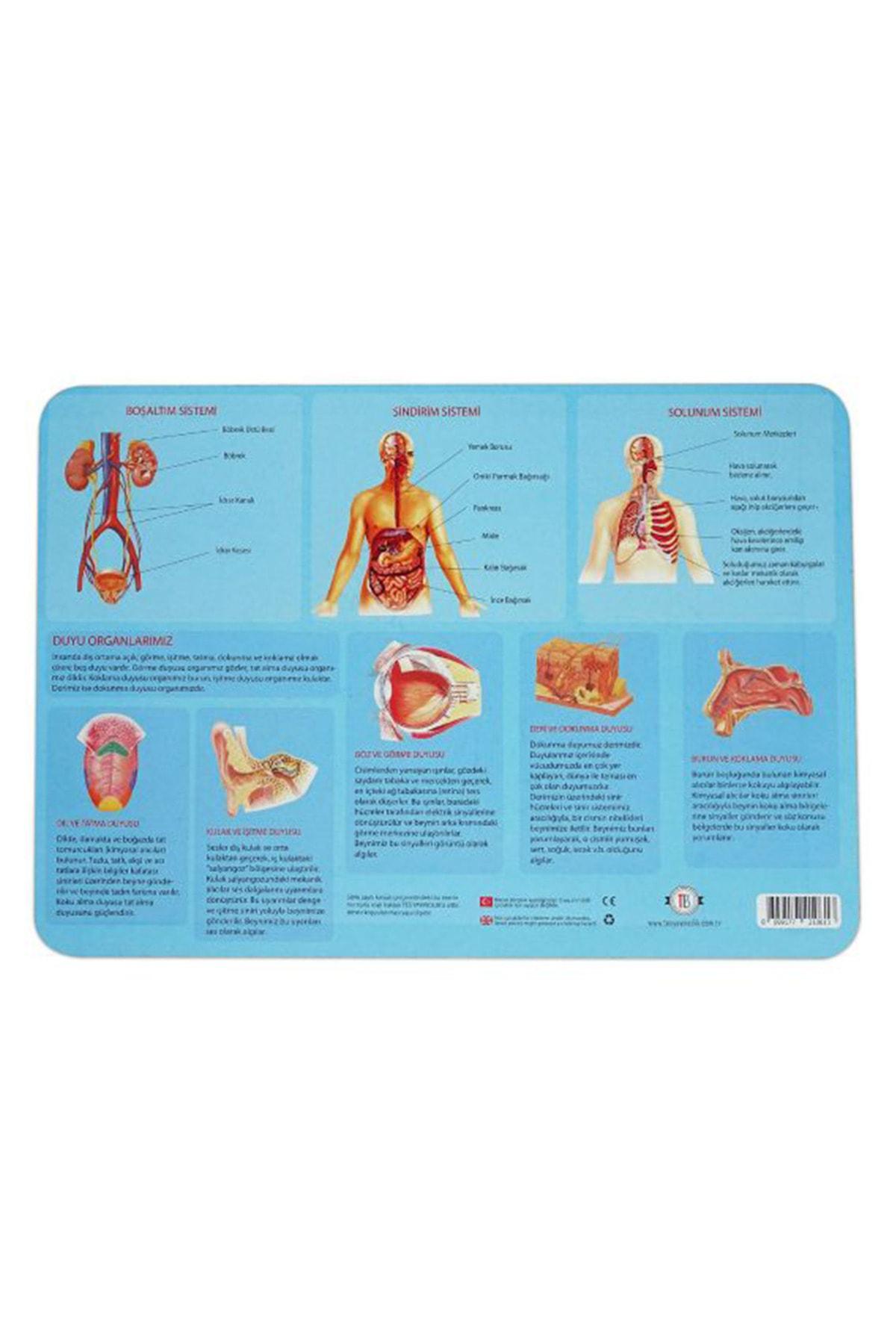 Tes Yayıncılık Vücudumuzu Tanıyalım Puzzle 35 Parça 28x40 Cm 2