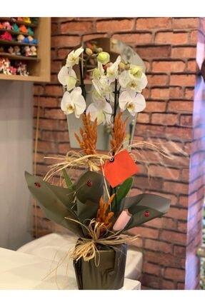 Orkide Cift Dal Beyaz