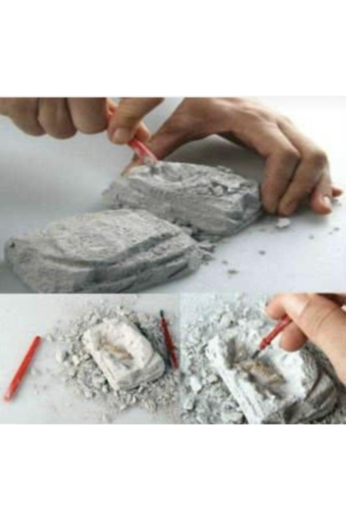 AZOY 6 Adet.. Dinazor Serisi .. Arkeolojik Bilim Kazı Seti.. 1