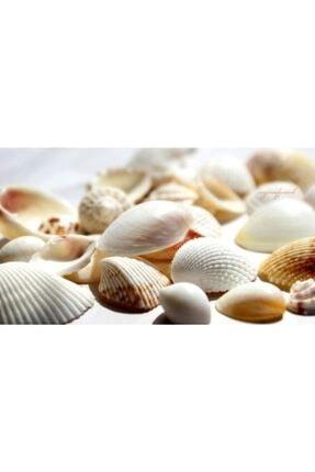 Aker Hediyelik Büyük Deniz Kabukları  200gr