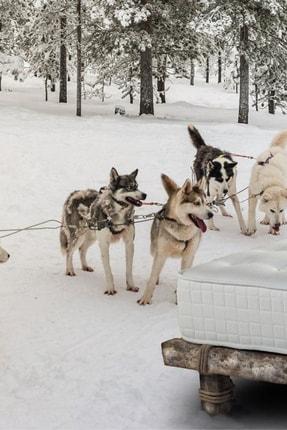 Halsa Lappland At Kuyruğu Kılı GOTS Sertifikalı %100 Organik Pamuk El Yapımı Yatak