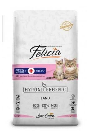 Felicia Mother & Kitten Kuzu Etli Yavru Kedi Maması 2 Kg