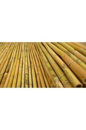 YAĞMUR BOTANİK Bambu Çubuğu 2.5 Metre Kalınlığı 8-10 Cm