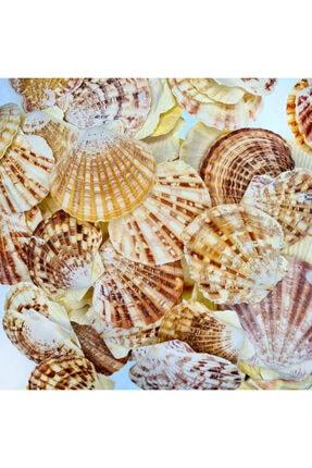 Turkuaz hediyelik Deniz Kabuğu 500 Gr Paket Pecten Mascarensıs