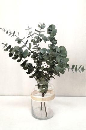 Kuru Çiçek Deposu Şoklanmis Küçük Mavi Okaliptus Demeti