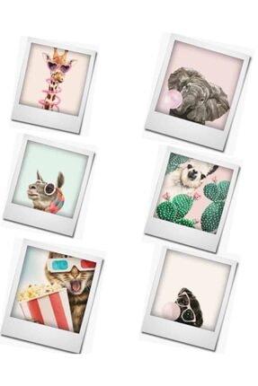 Express Eğlenceli Hayvanlar Serisi Buzdolabı Magneti 6'lı