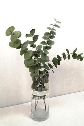 Kuru Çiçek Deposu Şoklanmis Büyük Yeşil Okaliptus Demeti