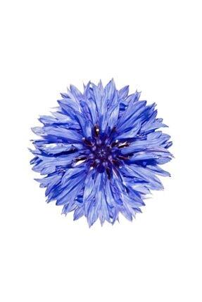 Çam Tohumculuk Mavi Kantoron Çiçeği Tohumu 5 Adet Tohum Çiçek Tohumu Kantaron