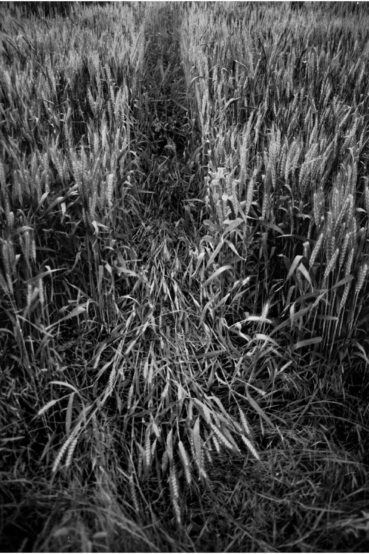 Onur Mehame Knar 15, 20x30, S/B Negatif Film + C-Print Baskı 1