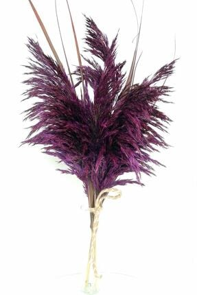 Kuru Çiçek Deposu Gerçek Kuru Çiçek Mor Dökülmeyen Şoklanmış Pampas 7 Adet 100 cm