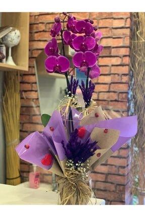 Orkide Çiçek Mor
