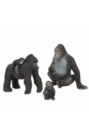 Isabel Terra Goril Ailesi