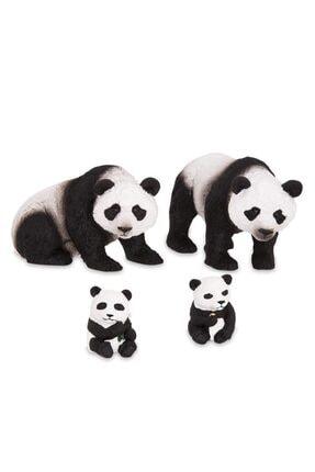 Isabel Terra Panda Ailesi