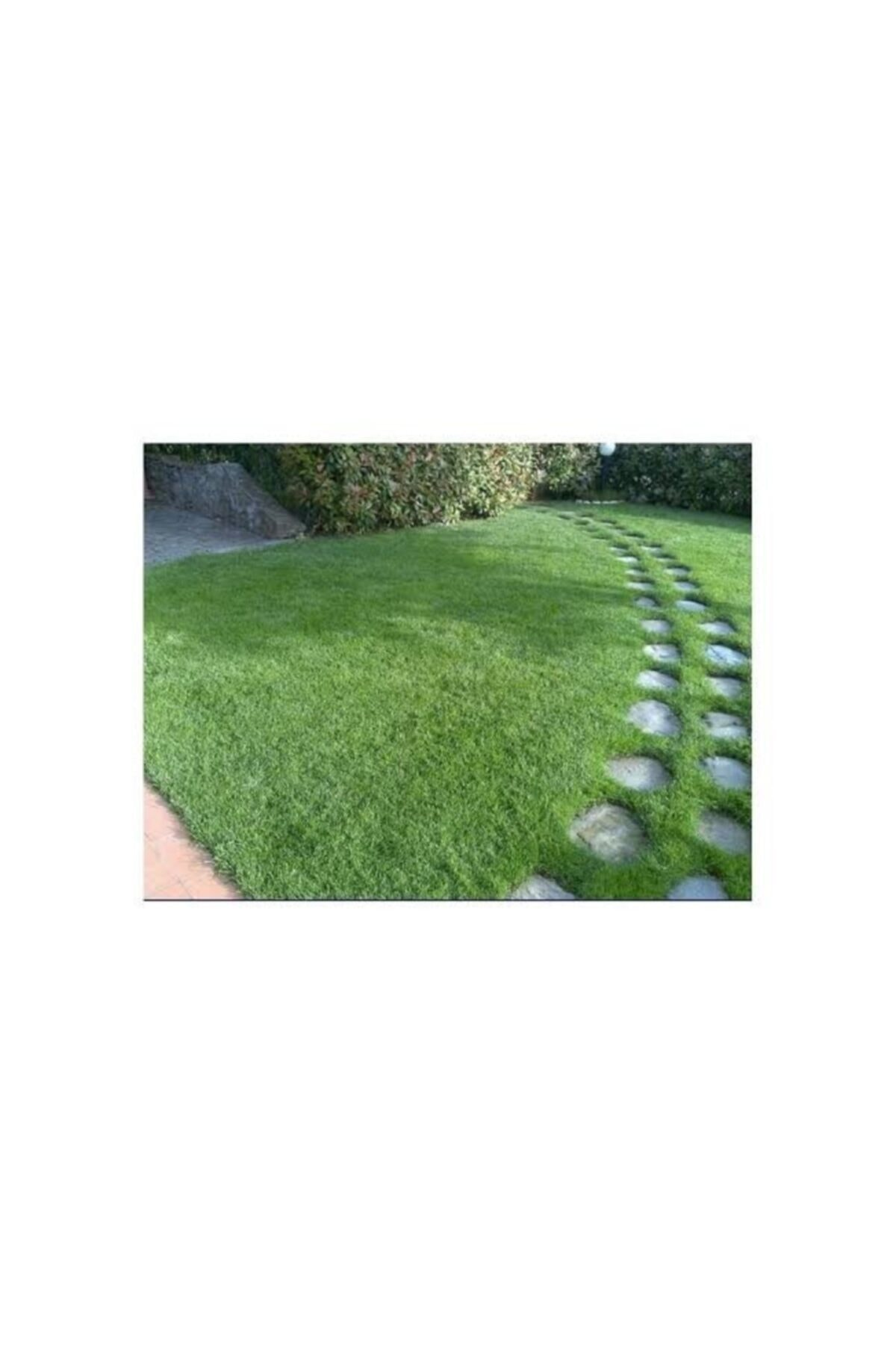 GRASS MIXTURE Çim Tohumu 10 Kg 6 Mix Altılı Karışım İthal Ot Çayır Tohum 2