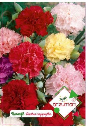 Arzuman Tohum Karanfil Çiçek Tohumu (100 Adet)