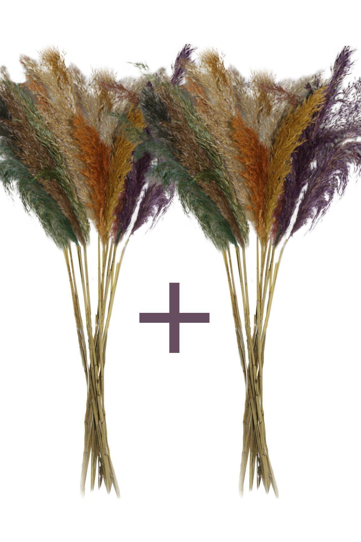 Dekolia Pampas - Kuru Çiçek 30 Adet 100 Cm Karışık Renkli 1