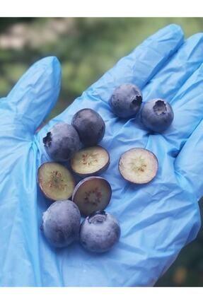 ORGANİKORMAN Yaban Mersini (blueberry) Dondurulmuş 1 Kg