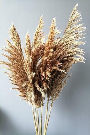 Kuru Çiçek Deposu Gerçek Kuru Çiçek Natural Dökülmeyen Şoklanmış Pampas 7 Adet 100 Cm