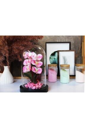 miraye Ters Fanus Plastik Orkide Tereryum
