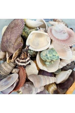 Turkuaz hediyelik Dekoratif Büyük Boy Gerçek Deniz Kabuğu Seti-mıxed Shells