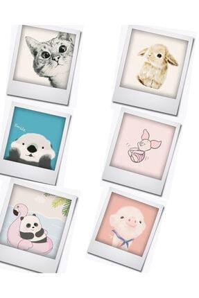 Express Sevimli Hayvanlar Buzdolabı Magnet Serisi 6'lı