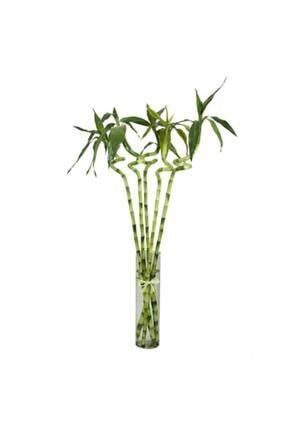 Çiçek Butiq Şans Bambusu 60cm