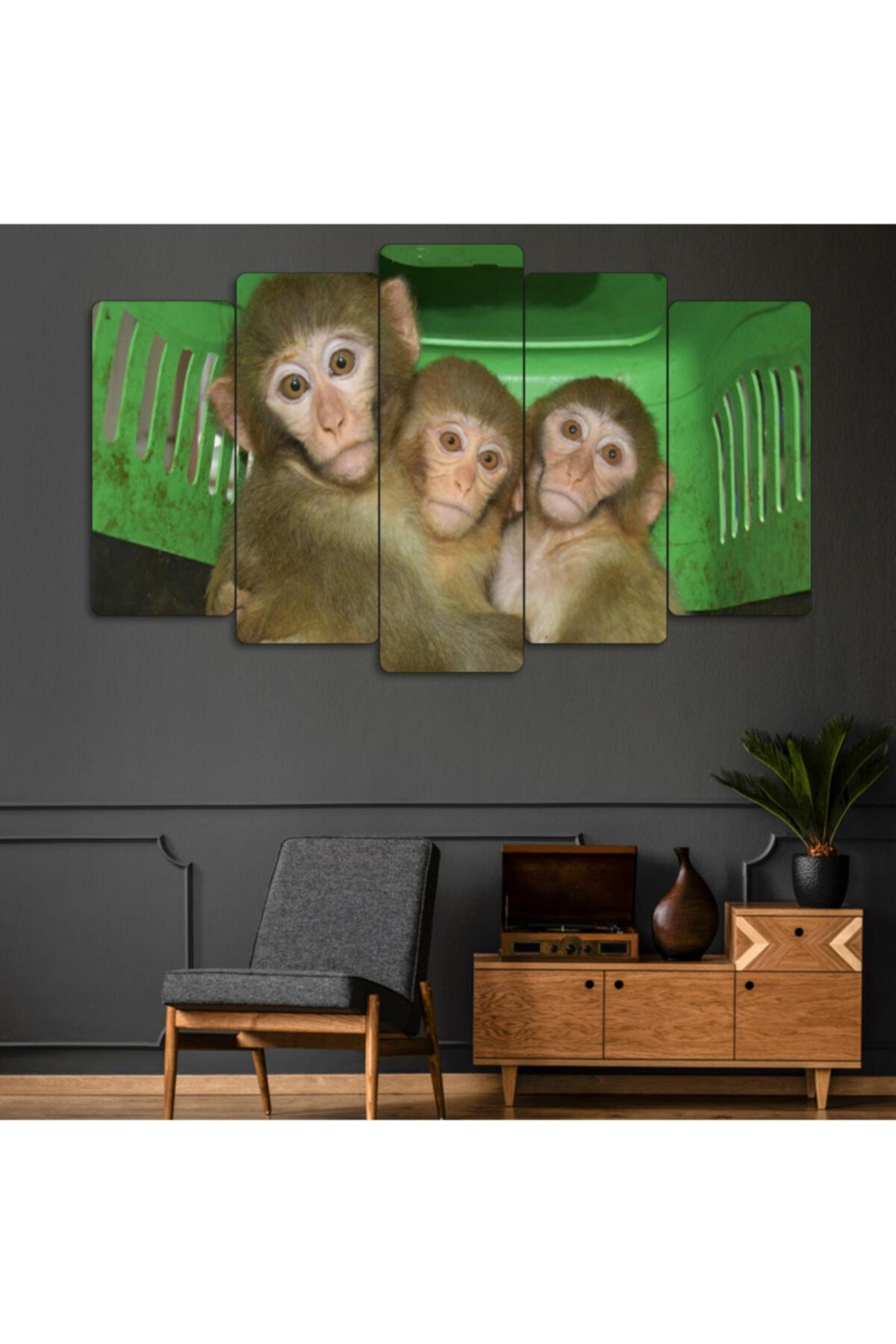 Evonya Yeşil 3 Maymun Görmedim Duymadım Bilmiyorum 5 Parçalı Dekoratif Tablo 1