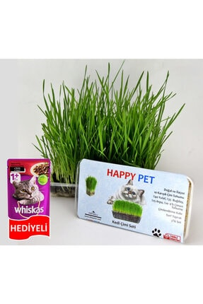 Happy Pet Kedi Çimi Seti 100gr. Whiskas Mama Hediyeli (pet29)
