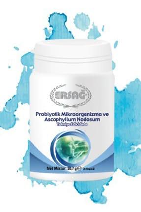 Ersağ Probıyotık Mıkroorganızma Ve Ascophyllum Nodosum
