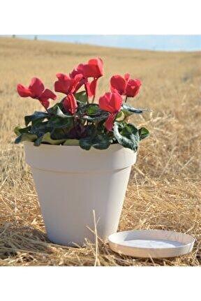 Yalı Saksı 6 Lt 1 Adet Krem Saksı Renkli Saksı Plastik Saksı Çiçek Saksısı Tabaklı Saksı